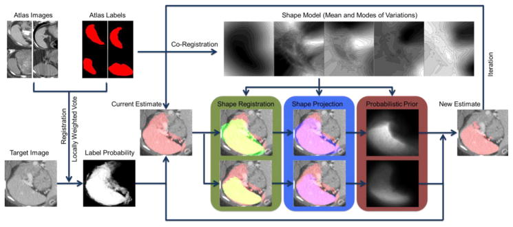 Figure 3 Flowchart of the proposed method. The atlas labels are co-registered to construct a pose-free implicit parametric shape model, including the mean and the modes of variation of the spleen shape. The atlas images are registered to the target image, based on which the atlas labels are propagated to the target space. The locally weighted vote yields the initial fusion result of the registered atlas labels weighted by the local intensity similarity between the registered atlas images and the target image in the form of a fuzzy estimate of label probability and a binary estimate of spleen segmentation. The binary image of the mean shape from the pre-constructed spleen shape model is registered to that of the current estimate with two distinct effective ranges, i.e., (1) the whole volume of both image and (2) the mean shape region, of the similarity metric of registration so that the pose-free shape model is transformed into the target space. The current estimate of the spleen is then projected to the two registered shape models. The shape projections are converted into probabilistic priors to adjust the label probability from locally weighted vote, and then generate a new estimate of the spleen. The estimate can be refined with iterative adjustment.