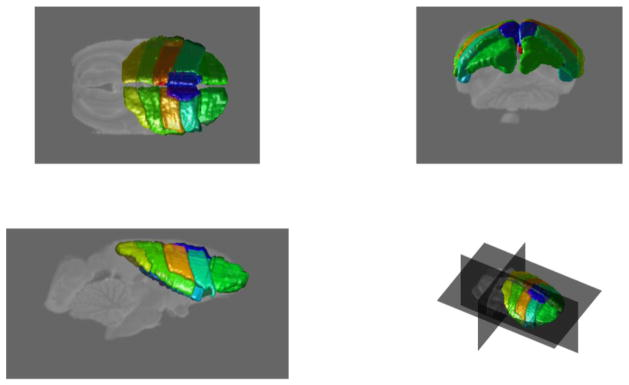Figure 4 Rendering of the manually labeled cortical regions ().