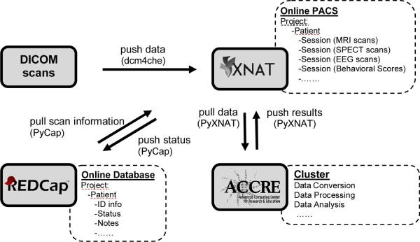 Overview of the integrated system. Multi-modal DICOM scans (upper left) are pushed to the XNAT/PACS server (upper right) via dcm4che tools. Verified DICOM scans are pulled and distributed to the cluster (bottom right) for further conversion, processing, and analysis by PyXNAT package scripts. The output results are pushed back for storage on XNAT. The online database REDCap (bottom left) provides/stores related information to/from XNAT. Black arrows indicate the directions of the data flow.