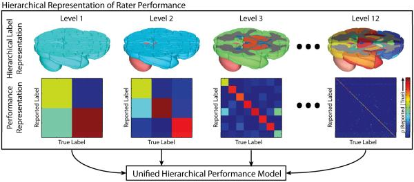 Hierarchical representation of rater performance. A hierarchical model is developed for the brain, where, at each level, the performance of a rater is quantified. The overall quality of rater is then estimated through the unified hierarchical performance model.