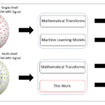 Different classes of methods have been used to infer tissue microstructure from single shell and multi shell DW-MRI data. The gap addressed herein is in data-driven machine learning models for multi-shell DW-MRI data.