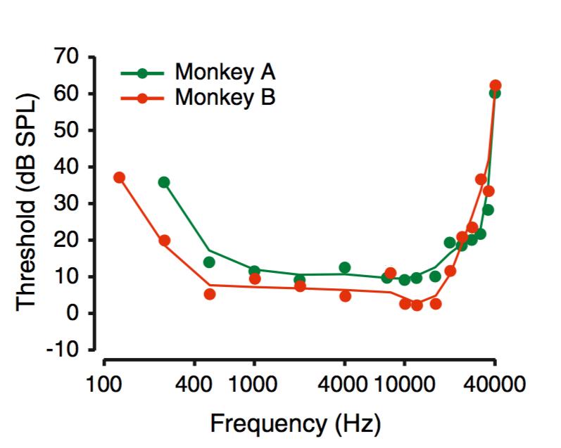 Macaque audiogram