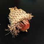 bur-acorn1